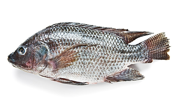 Burum seafood company burum seafood company specialized for Fish that eat other fish