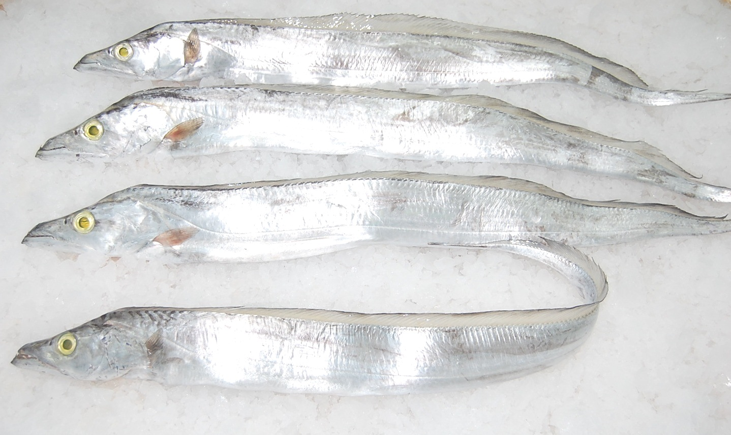 how to clean belt fish